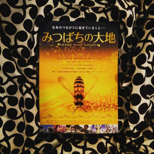 映画 「みつばちの大地」 More than honey