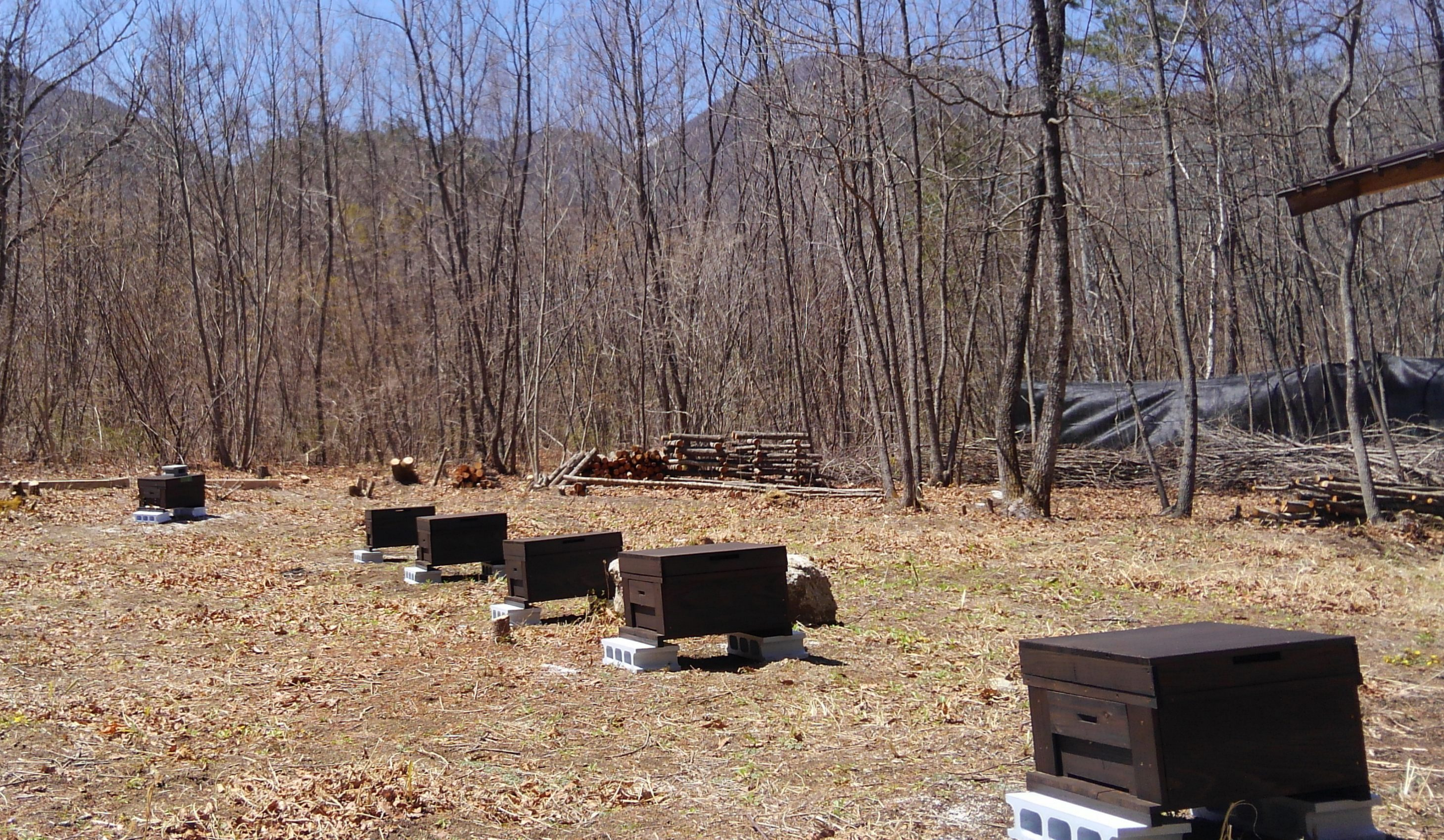 養蜂家になるには